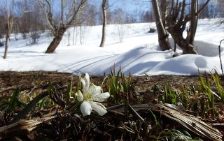 Spring Thaw Weight Restrictions